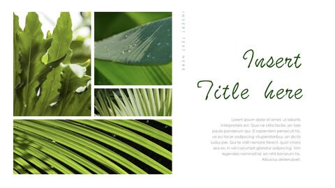 Botanical Simple Keynote Template_13