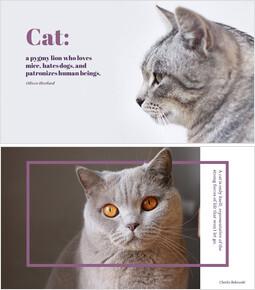 Cat_00