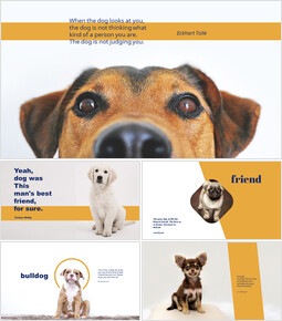 Dog_6 slides
