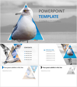 Free PPT Presentations - Seagull_00