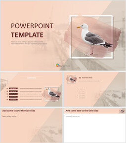 Seagull - PPT Free Download_00