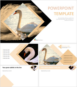 Swan Lake - Best PPT Template Free Download_00
