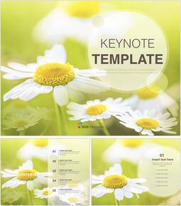 야생의 꽃 - 무료 키노트 템플릿 디자인_6 slides