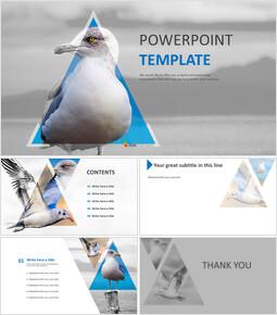 Seagull - Google Slides Images Free Download_6 slides