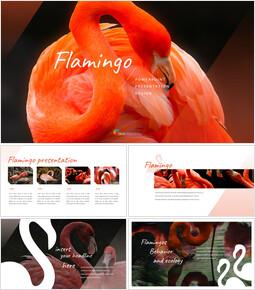 플라밍고 프레젠테이션용 Google 슬라이드_00
