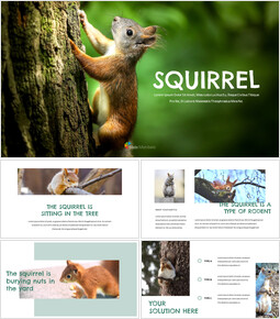 Squirrel Easy Slides Design_00