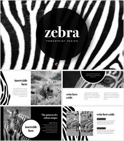 zebra Keynote Templates for Creatives_00