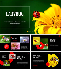 Ladybug Google presentation_00