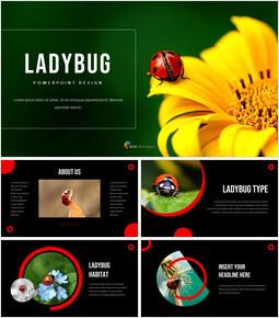 Ladybug Theme Presentation Templates_00