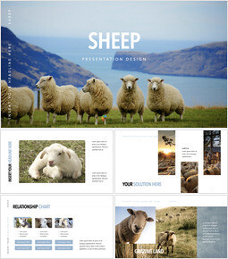 Sheep PowerPoint for mac_00