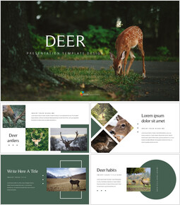 Deer company profile template design_00
