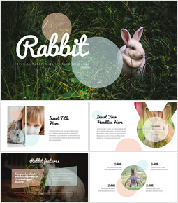 Rabbit Business Strategy PPT_00