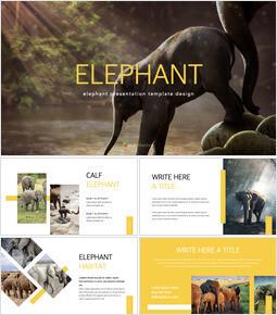 Elephant keynote theme_40 slides