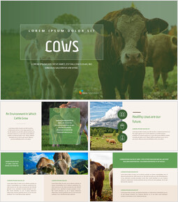 Cow Google PowerPoint Slides_40 slides