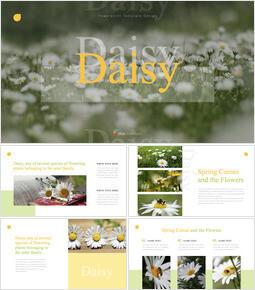Daisy Keynote Presentation Template_35 slides