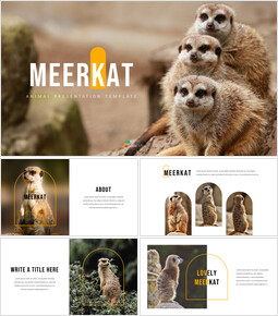 Meerkat slide powerpoint_35 slides