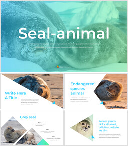 Seal Google Slides Themes & Templates_40 slides