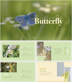 Butterfly Simple Keynote Template_35 slides