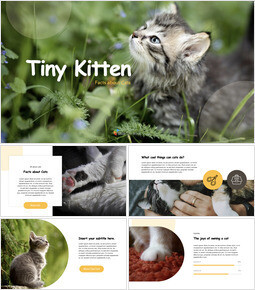 Tiny Kitten Keynote for PC_35 slides