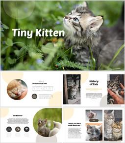 Petit chaton Modèles commerciaux PowerPoint_35 slides