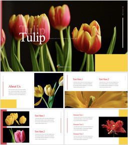 Tulip Multipurpose Keynote Template_35 slides