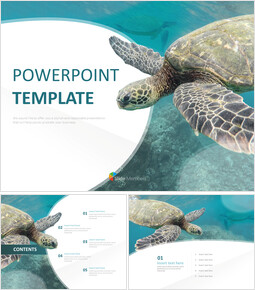 Free PPT Template - SeA Turtle_00
