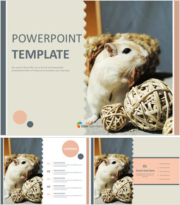 Hamsters for Pet - Free Powerpoint Template_00