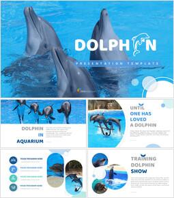 Dolphin Google Slides Template Diagrams Design_00