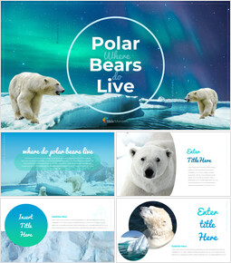 Where do polarbears live Google Presentation Templates_00